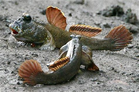 Young Scientists: Fish that Walk on Land