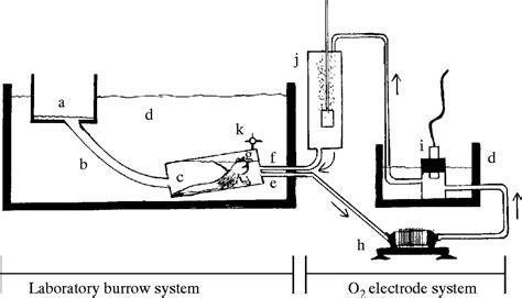 Burrow air phase maintenance and respiration by the